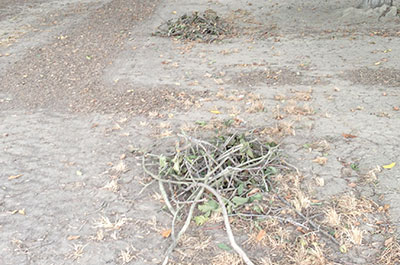 Stick and Debris Removal
